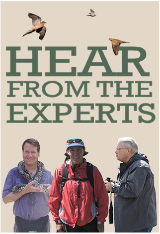 Hear From The Experts